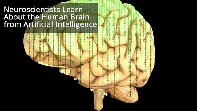 Dissecting Artificial Intelligence To Enable Better Understanding of the Brain