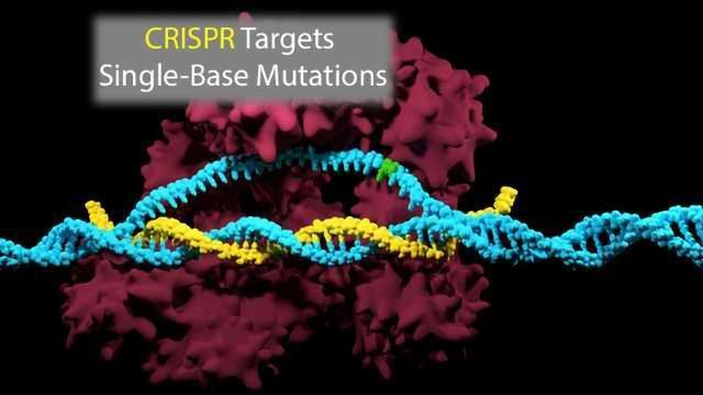CRISPR Targets Small Mutations That Cause Life-Threatening Diseases