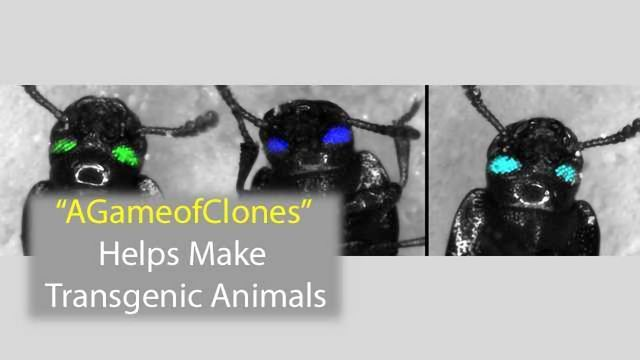 A Game of Clones