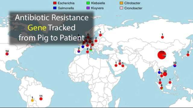 Antibiotic Resistance Gene Travels from Pigs to Patients
