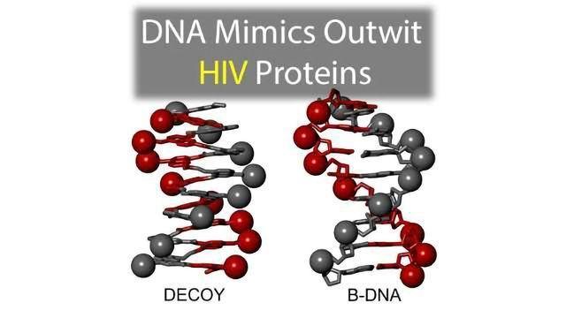 DNA Mimics Outwit HIV