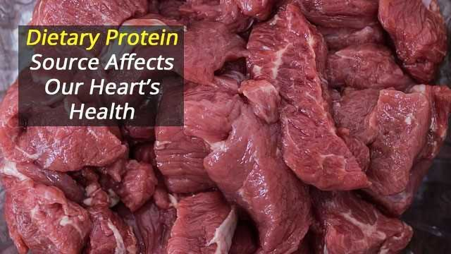 Dietary Protein Source Matters