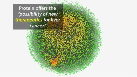 Anti-Tumor Protein Targets Liver Cancer