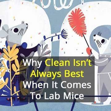 Squeaky Clean Mice Could be Ruining Research | Technology