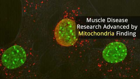 Losing Just One Mitochondrial Protein Causes Severe Inflammation