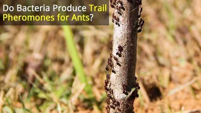 Bacteria and Fungi Play Vital Roles in Social Insect Colonies