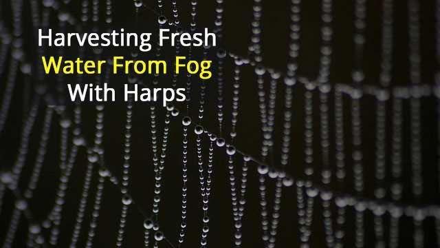 Fog Harvesting with Harps