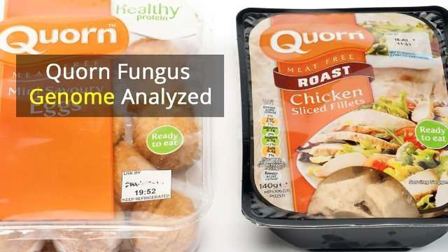 The Genes That Make Quorn a Fungal Food Favorite