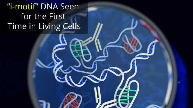 A New Form of DNA Has Been Found
