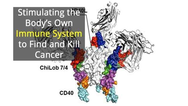 Sweet Spot of Activity in Immune System Key to Fighting Cancer