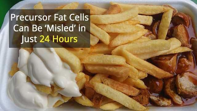 Fat Cells Seem to Remember Unhealthy Diet