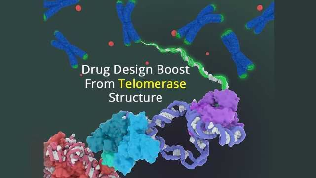 First Detailed Structure of Telomerase Revealed