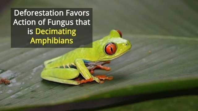 Environmental Changes Affect Pathogen Dynamics