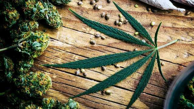 Ultrasound-assisted Extraction of Cannabinoids: Double the Yield in Half the Time