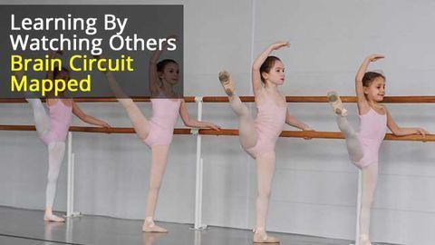 Do As Others Do: Brain circuit helps us learn by watching others