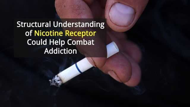Nicotine Receptor Structures May Lead to Therapies for Addiction