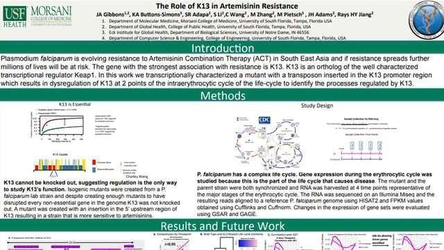The Role of K13 in Artemisinin Resistance