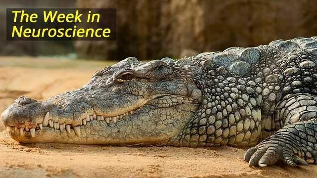 Weekly Neuroscience News Round Up