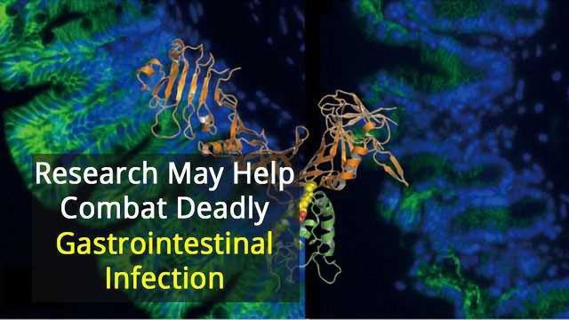 Revealing How C. diff Recognises its Human Target
