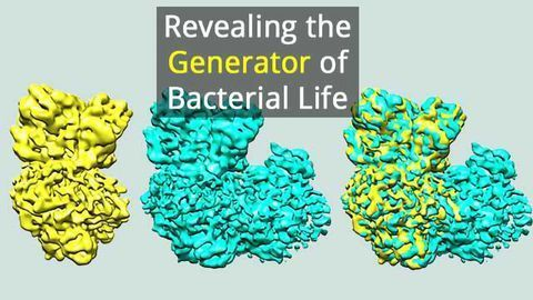How Bacteria Guide Electron Flow for Efficient Energy Generation