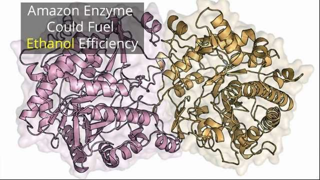 Amazonian Enzyme Could Boost Ethanol Fuel Production