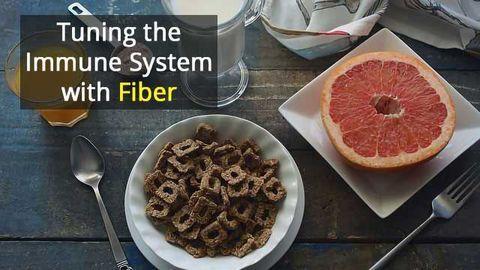 High-Fiber Diet Protects Mice Against Flu