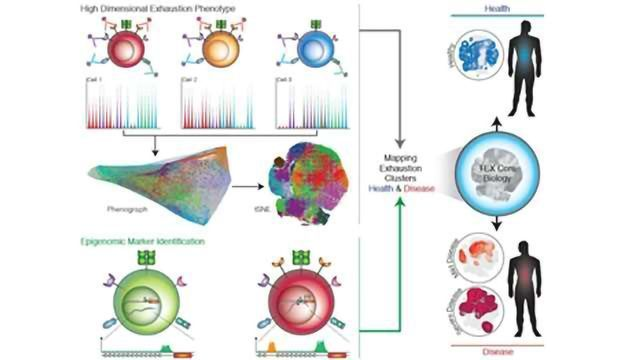 Different Diseases Elicit Distinct Sets of Exhausted T Cells