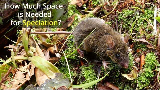 Island Life: Worm-eating Mice Hold Clues to Evolution