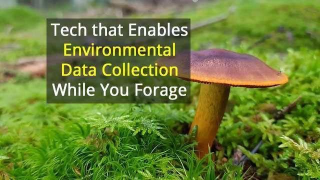 Fungi Hunting Goes Hi-Tech