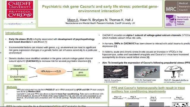 精神病风险基因cacna1c和早期生命压力:潜在的基因环境相互作用?