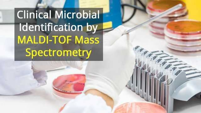 Clinical Microbial Identification by MALDI-TOF Mass Spectrometry