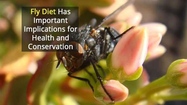 Missing Link Between Blow Flies and Possible Pathogen Transmission