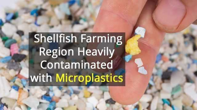 Prime Oyster Area Has Worryingly High Concentrations of Microplastics