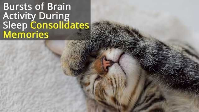 Reactivating Memories During Sleep Improves Consolidation