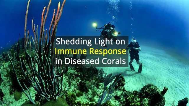 Strong Immune Response in Diseased Corals Potential Trade-Off