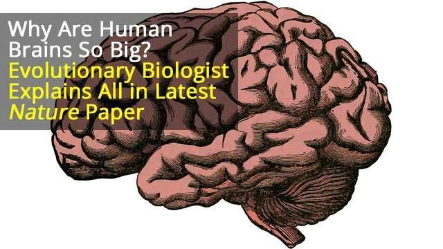Why do Humans Have Such Large Brains? Our Study Suggests Ecology Was the Driving Force