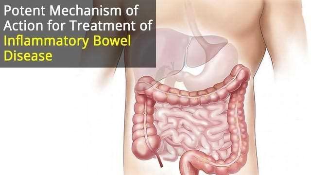 Novel Mechanism of Action for Inflammatory Bowel Disease Treatment