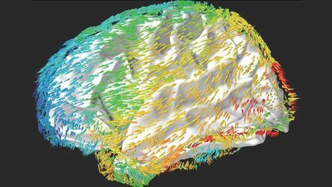 Engineers Reveal How Brain Waves Support Memory