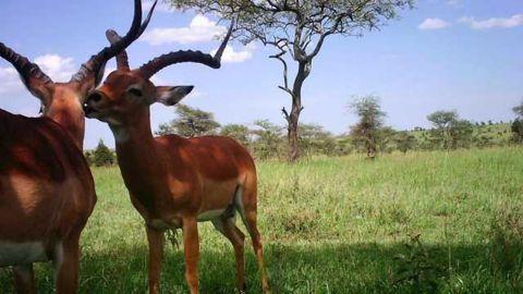 Counting Cheetahs: AI Helps Serengeti Conservation Efforts