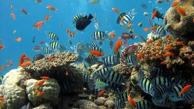 Coral Genome Study Reveals Surprising Twist