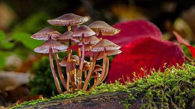 Psychedelics and the Potential of Plant Medicine