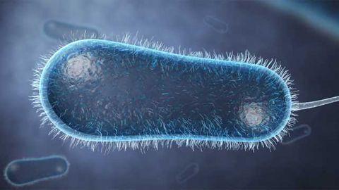 Agile Sciences-Breaking the Cycle of Antibiotic Resistance