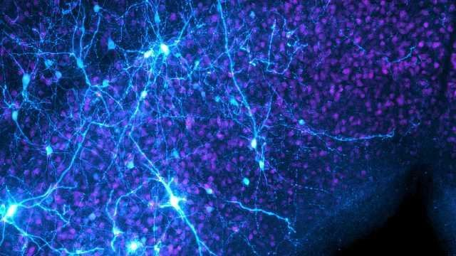 Synaptic Threshold Mechanism Computes 'When to Escape'