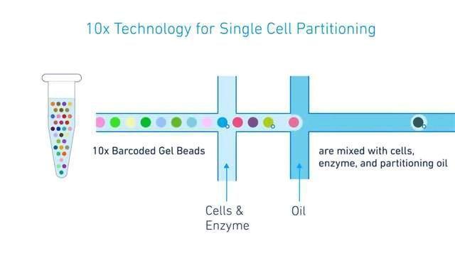 10x Genomics Extends their Application Portfolio