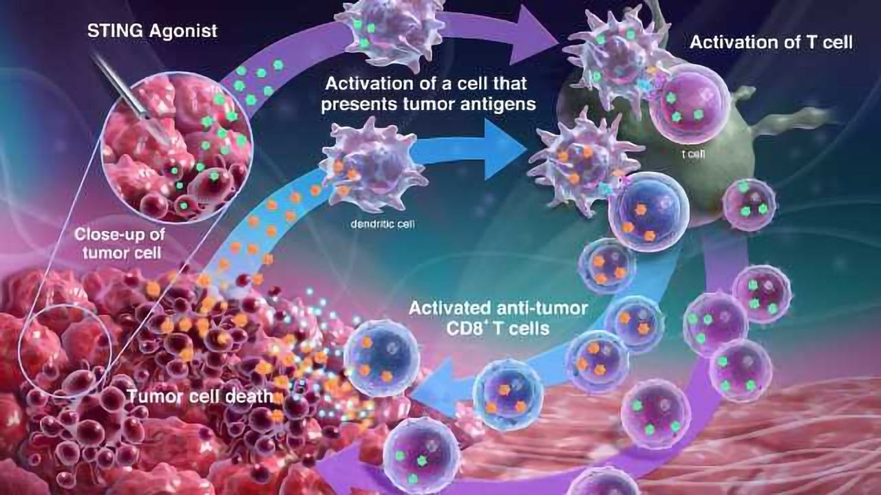 The STING Pathway and Cancer