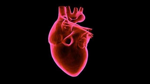 Stiff Heart Syndrome Linked to Altered Microtubules