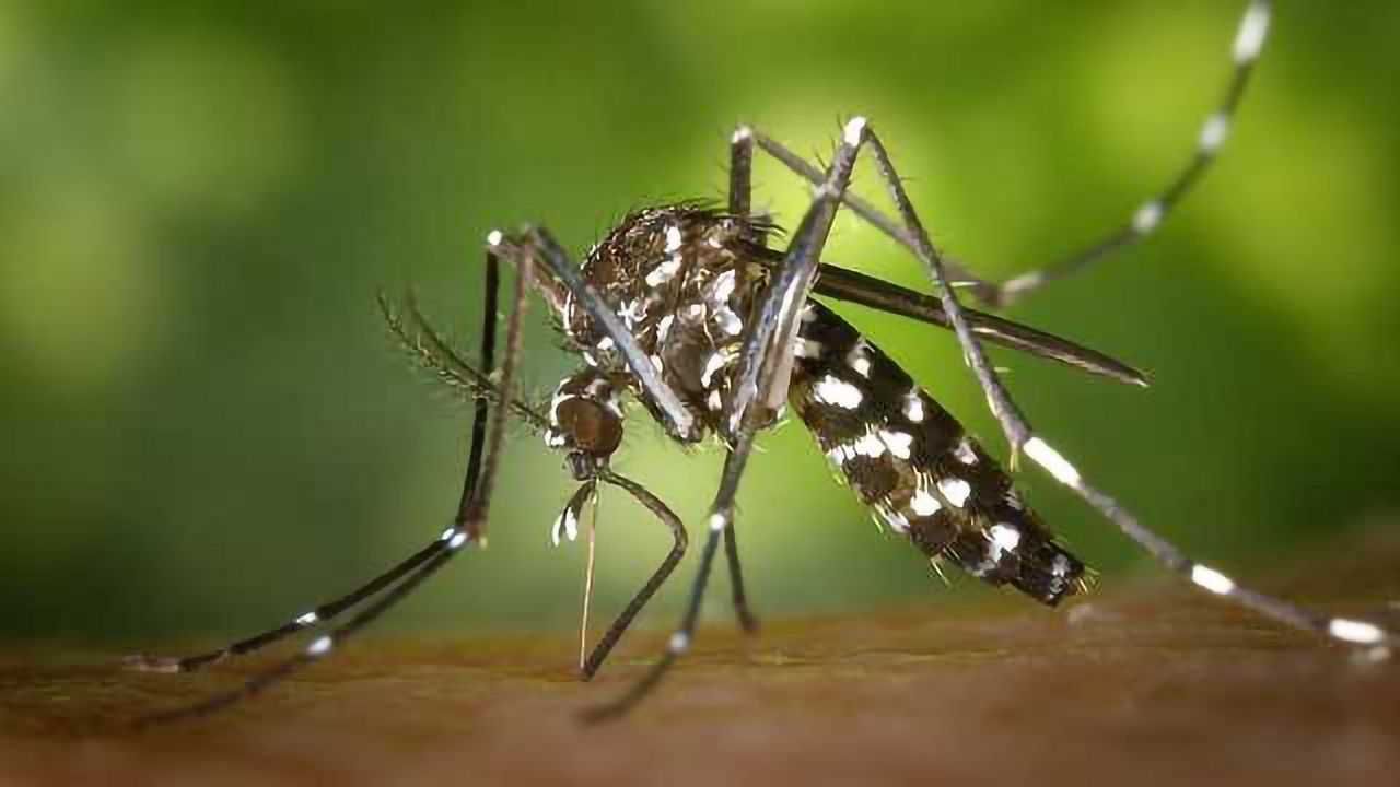 Pesticide-Free Way to Combat Mosquitoes and West Nile Virus
