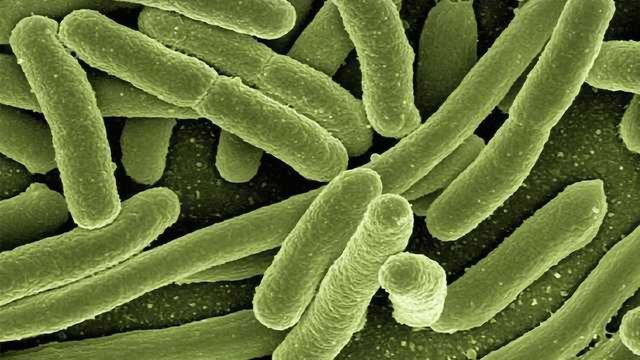 A Move Towards Precise Management of Bacterial Infections
