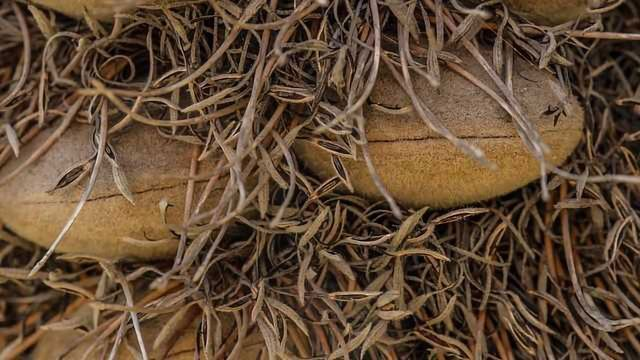 Self-Healing Mechanism Protects Seeds