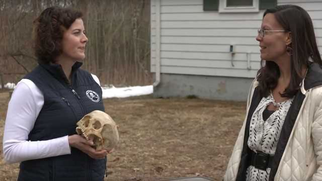 Can Bones Tell Us About Drug Use? How Boston Univ. Tests Solid Samples by 2DLC - Behind the Science